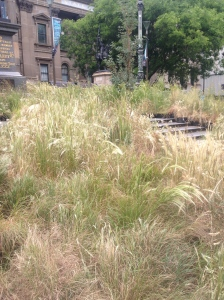 A great swathe of indigenous grasses that would once have grown naturally across much of Melbourne before 1835.