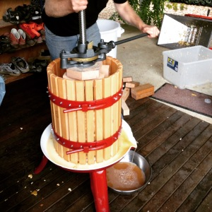 The pressing of the apples. See the lovely juice flowing into the bowl. It took a lot of elbow grease. Margaret proved to be the best presser of the three of us, I will concede.