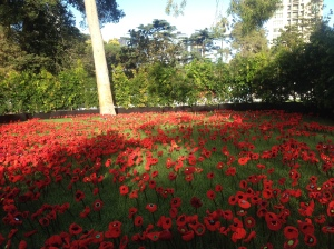 Phillip Johnson's field of poppies.