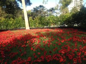 Phillip Johnson's field of poppies.